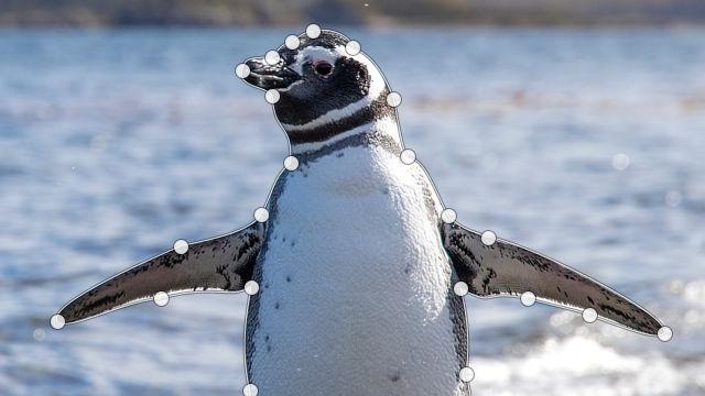 パスでペンギンの輪郭をなぞる