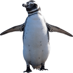 両翼を広げたペンギン