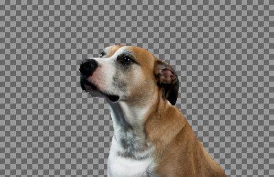 背景が透明の茶色い犬の画像