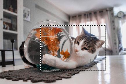気魚を狙う猫