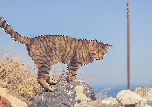 GIMP:選択ツールで範囲選択された猫