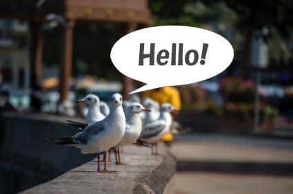 挨拶する白い鳥(ウミネコ)