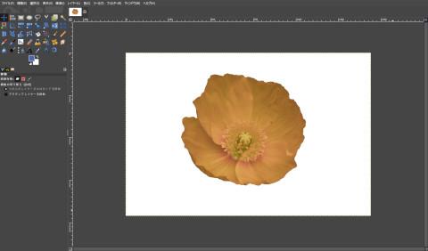 画像の読込み:黄色い花