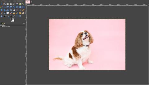 画像のを見込み:座っている茶色と白の犬