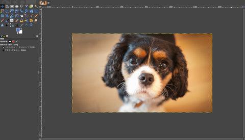 画像の読込み:茶色い犬